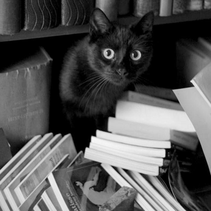 könyvcsere